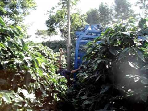 Mini colhedora de cafe TDI em lavoura arborizada