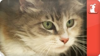 Unadoptables - Friendly cat stuck in overcrowded facility