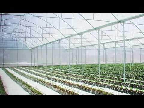 Metaliser .- El fabricante de invernaderos mas grande de Mexico