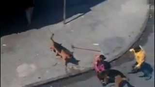 getlinkyoutube.com-Камнями против собак - это вредный совет