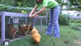 getlinkyoutube.com-Raising Hens in Columbia, Missouri - Containment