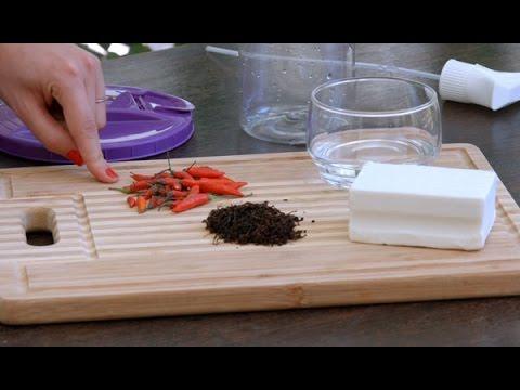Receita de inseticida natural para jardim e horta