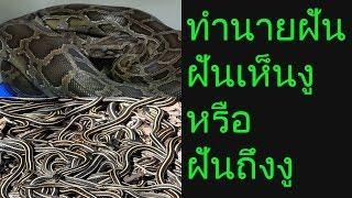 getlinkyoutube.com-ฝันเห็นงู หรือ ฝันถึงงู(พร้อมเลขเด็ด)