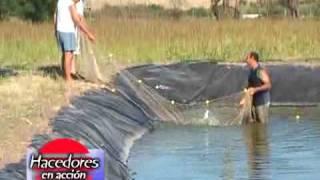 getlinkyoutube.com-Criadero de peces Pezcampero