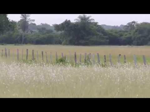 Aves de Venezuela - Aves de Barinas 7