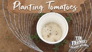 getlinkyoutube.com-NEW WAY to Plant Tomatoes in Your Garden!