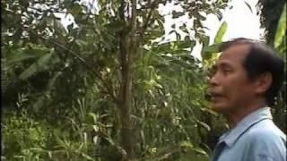 getlinkyoutube.com-สวนเกษตรเงินล้าน