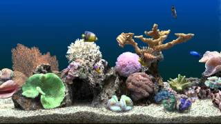 getlinkyoutube.com-Marine Aquarium Virtual Fishtank