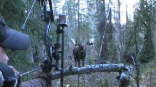 getlinkyoutube.com-Yukon Moose Hunt