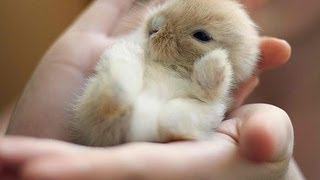 Little Bunny Only Sleeps When He Is On His Back - THE CUTEST VIDEO EVER