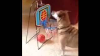getlinkyoutube.com-Tigger tricks!!