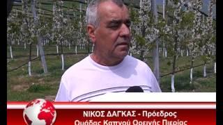 getlinkyoutube.com-ΚΕΡΑΣΙΑ ΜΟΣΧΟΠΟΤΑΜΟΣ