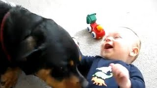 getlinkyoutube.com-Baby Playing With ! Pit bull, Boxer, Doberman, Bull Terrier, Rottweiler, Collie, Retriever, Foxhound