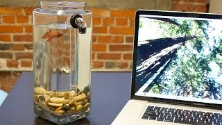 getlinkyoutube.com-NoClean Aquariums - Betta Fish Tank
