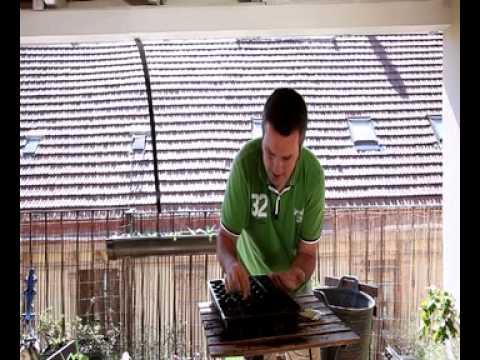 Cómo sembrar maiz en nuestro balcón//Balcón comestible//LlevamealhuertoTv