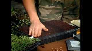 Ошибки при посадке семян и рассады