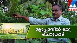 getlinkyoutube.com-Forest on the rooftop | Manorama News| nattupacha