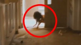 getlinkyoutube.com-5 Scariest Creatures Caught On Camera & Spotted In Real Life!
