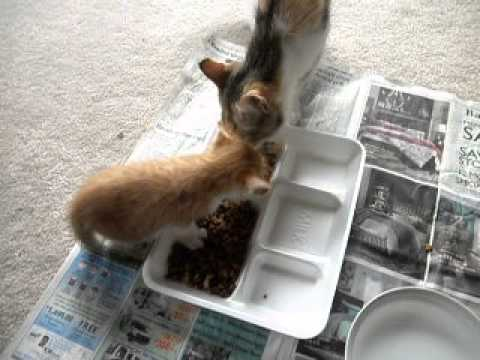 more videos of kittens 060413 003