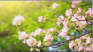 Soothing Flute Music for Meditation. Relaxing Music for Stress relief, Yoga, Spa, Sleep