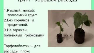 getlinkyoutube.com-Выращивание рассады