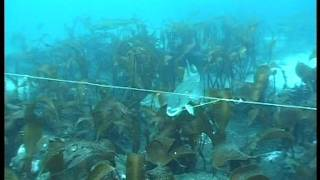 getlinkyoutube.com-Underwater camera from longline fishing of cod