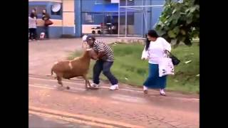 getlinkyoutube.com-Bode aterroriza Londrina-remix