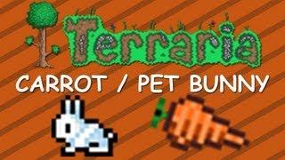 getlinkyoutube.com-Terraria - Bunny Pet and Carrot (Terraria Collector's edition)