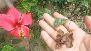 स्मरण शक्ति और वीर्य शक्ति एक साथ फ्री में | Smran Shakti or Virya Shakti Ek saath