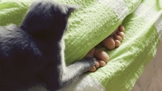 getlinkyoutube.com-Funny cats waking up owners – Funny cat compilation