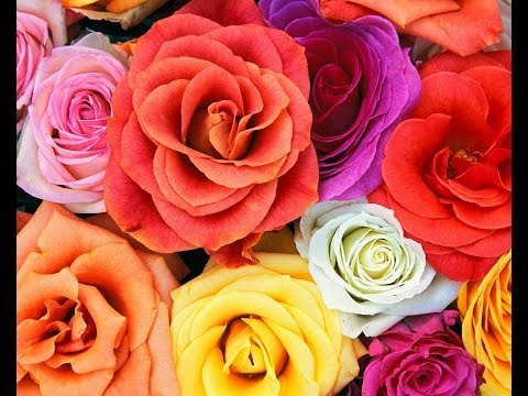 Kata Kata Mutiara Cinta 2014 Kata mutiara cinta Bijak Kehidupan motivasi persahabatan Romantis Islam