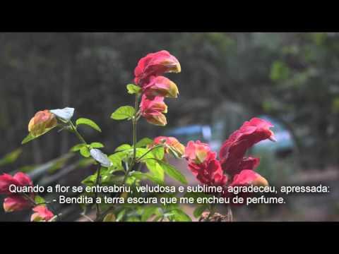 02 Mensagem Espirita - GLORIFIQUEMOS - Emmanuel Chico Xavier