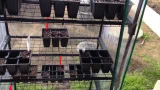 New Greenhouse - Starting Seeds