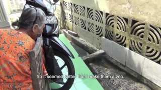 getlinkyoutube.com-Ojeg si Buaya Sempur