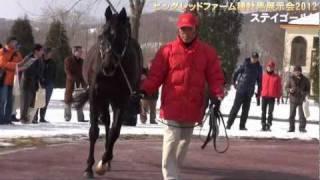getlinkyoutube.com-ステイゴールド - ビッグレッドファーム種牡馬展示会2012