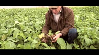 Mzuri Cover Crops Autumn 2014