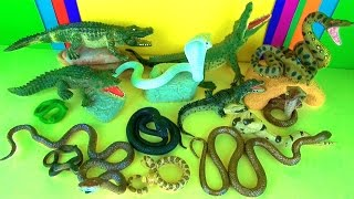 getlinkyoutube.com-Wild Animals - Crocodiles Alligator & Lots of Scary Snakes! Serpiente serpente jibóia