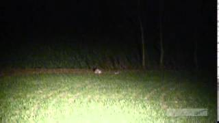 getlinkyoutube.com-Lamping Night Rabbit Shooting With A 22 Rifle