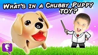getlinkyoutube.com-What's Inside a Chubby Puppy Toy? Surprise Toy Fun Science Lab + Mystery MLP HobbyKidsTV