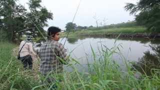 getlinkyoutube.com-FIN jump frog # ปลาช่อนบ่อร้าง