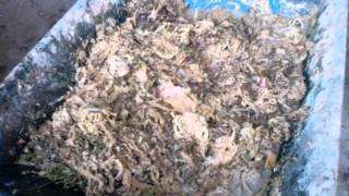getlinkyoutube.com-ทำอาหารสัตว์ และขั้นตอนการเลียงและผสมอาหาร