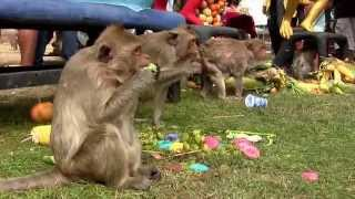 getlinkyoutube.com-Lopburi Monkey Festival,Thailand & Thai Festival Guide โต๊ะจินพี่จ๋อ ลพบุรี