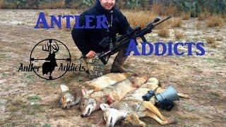 getlinkyoutube.com-Coyote Hunting With AR-15 5.56 - Triple Song Dog