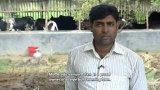 Bull Fattening Value Chain