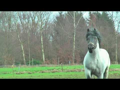 Belgian Draft Horses-national stallion champion 2014