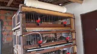 getlinkyoutube.com-viveiro de madeira para codornas parte 2