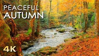 getlinkyoutube.com-Relaxing Autumn Forest - 4K Beautiful Nature Video & River Sounds - NO MUSIC - 1 hour Ultra HD 2160p