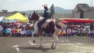 getlinkyoutube.com-Caballos bailadores tulyehualco 2014