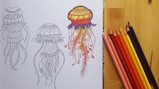 getlinkyoutube.com-Lost Ocean, Speed Coloring Jellyfish