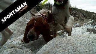 getlinkyoutube.com-Hound Hunt for Mountain Lions in Arizona!